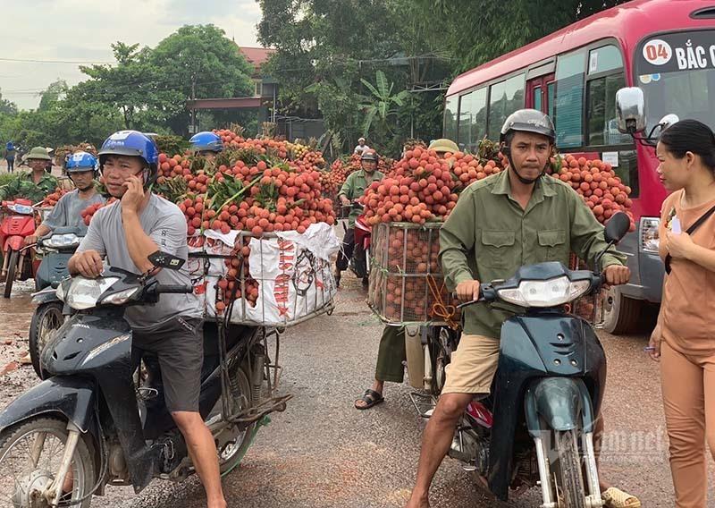 Ra khỏi 'trại' cách ly, 45 thương lái Trung Quốc gom ngàn tấn vải thiều