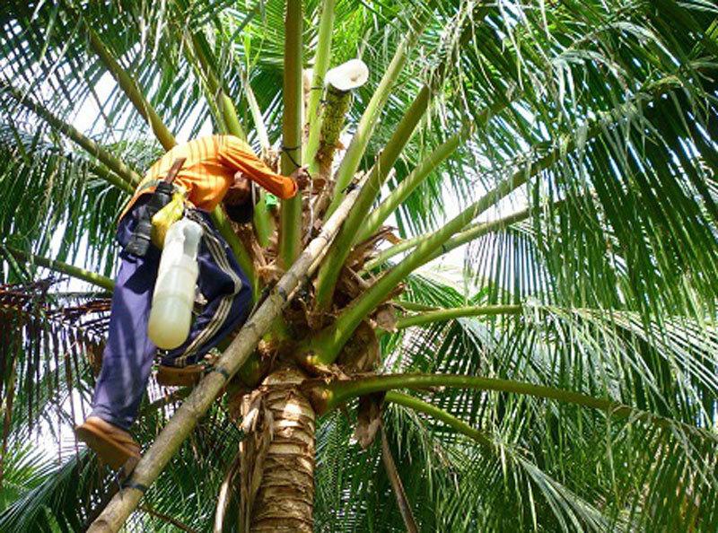 Vườn lan đột biến giá hàng chục tỷ của ông chủ kín tiếng Hà thành