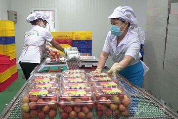 Chuyển đổi số, xuất khẩu trực tuyến hàng Việt ra toàn cầu