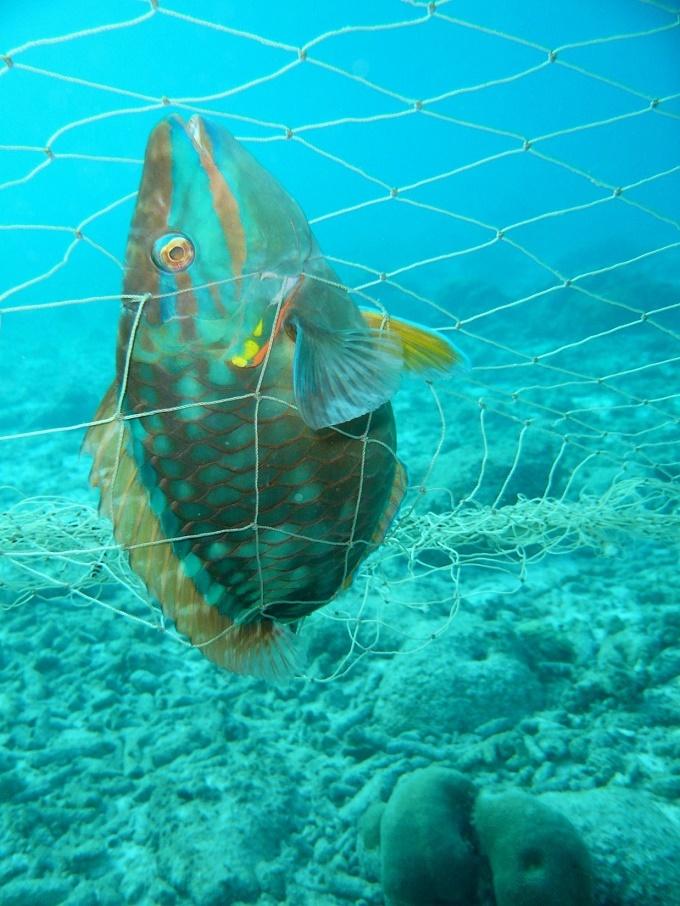Đặc tính khác biệt của cá vẹt: Làm ra 320kg cát mỗi năm