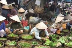 Bảo hiểm xã hội Việt Nam góp phần đẩy nhanh mục tiêu thiên niên kỷ