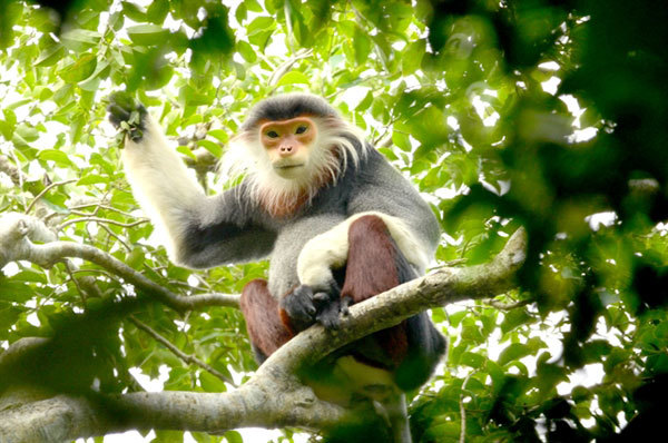 Conservationist devoted to protecting primates