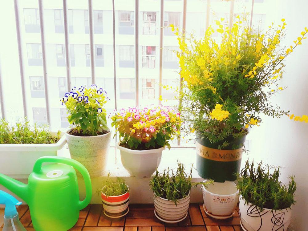 Những vật dụng đơn giản nhất làm mát ngôi nhà ngày nóng