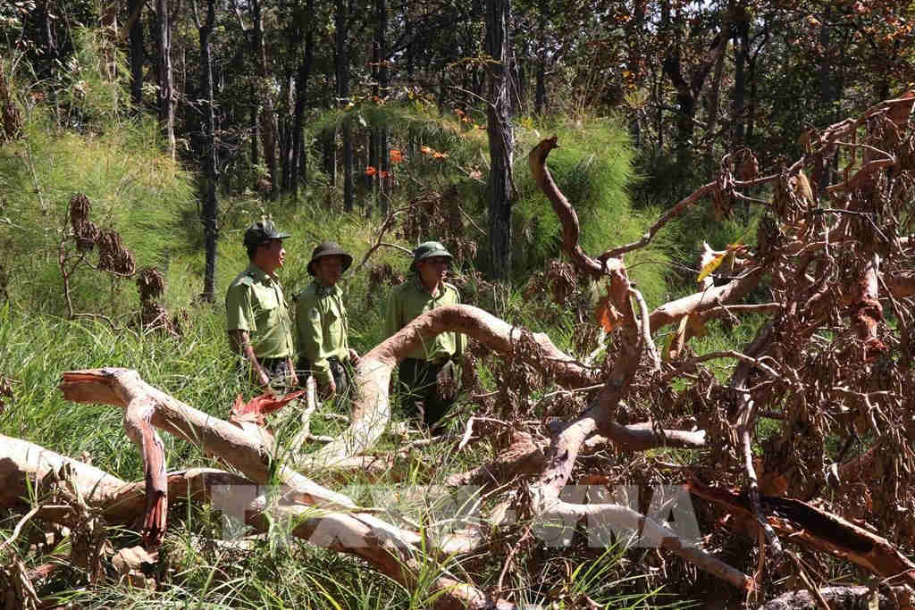 VN Central Highlands: easy to close forests, but difficult to bolt the door