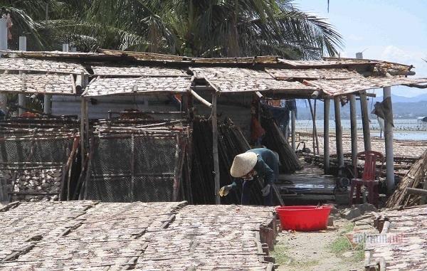 Ruột, túi mực và nước thải hôi thối xối xả thẳng ra biển, Đề Gi kêu cứu