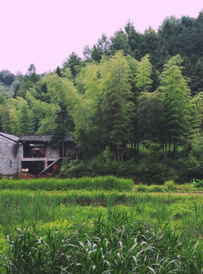 Những cặp vợ chồng bỏ phố lên rừng, sống cuộc đời bình yên