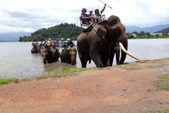 Conservationists call for elimination of elephant riding tours in Vietnam