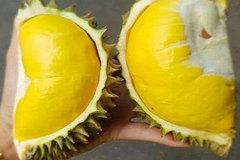 Thực hư sầu riêng mini Thái Lan, múi dày siêu ngon 50.000 đồng/quả