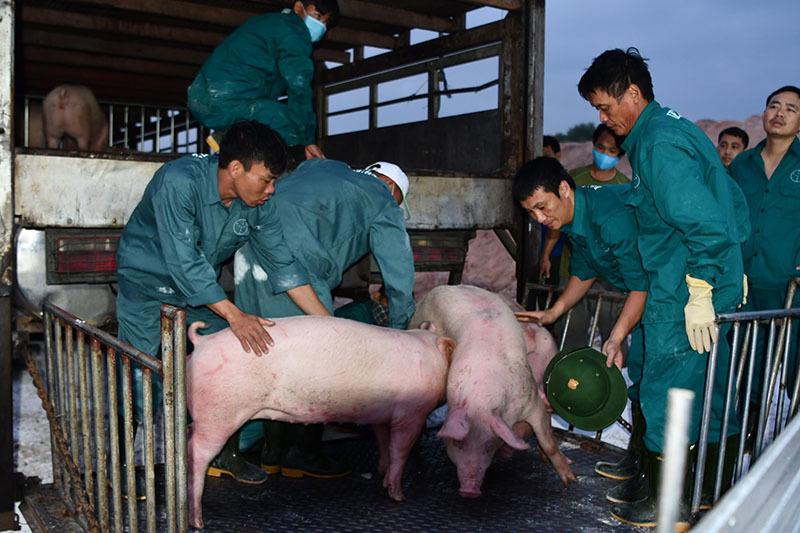 Tham lãi đậm, thịt lợn ế chợ, dân buôn quyết không giảm giá