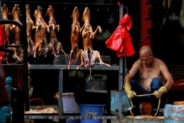 Lễ hội thịt chó lớn nhất Trung Quốc chuẩn bị 'vào mùa'