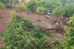 Cây xanh đổ trong cơ sở giáo dục ở Hà Nội
