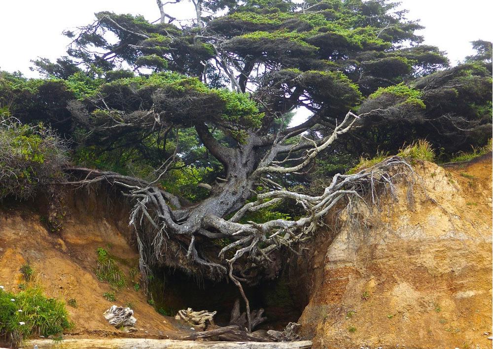 17 bức ảnh ấn tượng về sức sống mãnh liệt của thiên nhiên