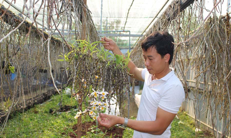 Khu vườn 10.000 giò lan rừng, gia tài bạc tỷ của thầy giáo trẻ