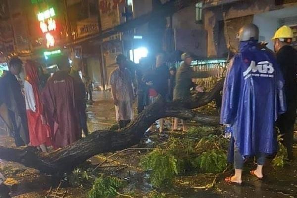Cây xanh bật gốc trong mưa dông đè chết người đi đường ở TP.HCM
