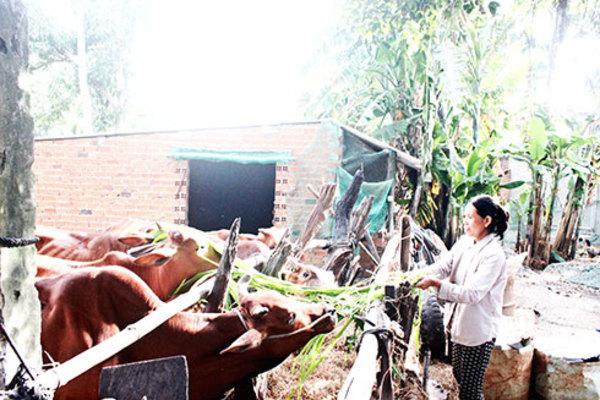 Khánh Hòa: Nhiều giải pháp chống tái nghèo