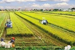 Miễn thuế đất nông nghiệp thêm 5 năm,  góp phần hỗ trợ trực tiếp nông dân