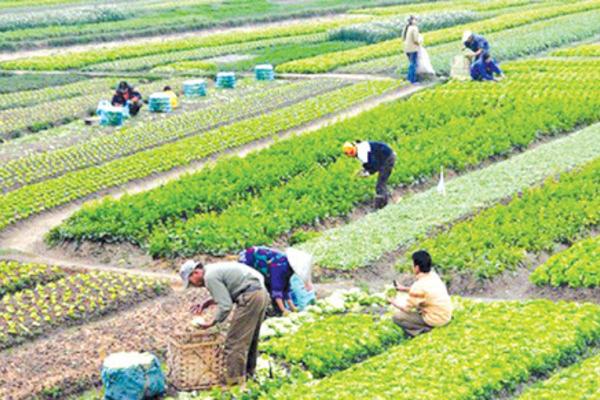 Kỳ Đồng: Nâng cao thu nhập từ vườn mẫu