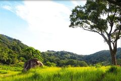 Tạo sinh kế bền vững từ vật liệu cỏ tranh