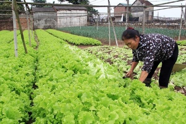 Hà Nội: Mở hướng cho nông dân làm giàu