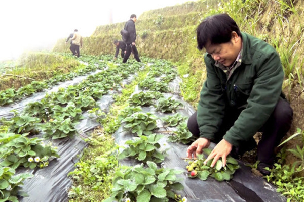 Hoàng Su Phì: Mục tiêu thu nhập bình quân trên 23 triệu đồng trong năm nay