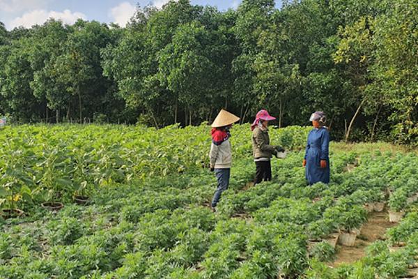 Bố Trạch: Nhiều mô hình mới góp phần nâng cao thu nhập cho nông dân