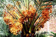Trồng loài lạ, chỉ 1 cây giống bán giá 10 triệu