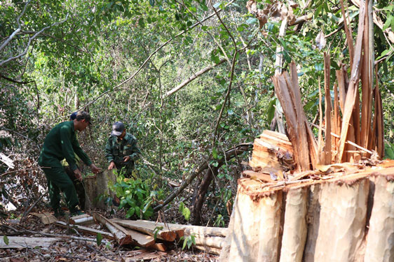 Natural forests in Vietnam wiped out despite strict regulations