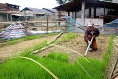 Quyết tâm vươn lên, không cam chịu đói nghèo