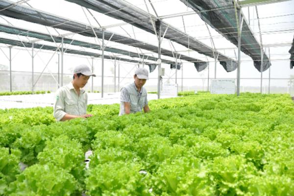 Cải thiện thu nhập nhờ chuỗi liên kết trong sản xuất nông nghiệp