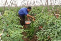 Yên Ninh: Nhiều hoạt động thiết thực giúp người nghèo tự vươn lên
