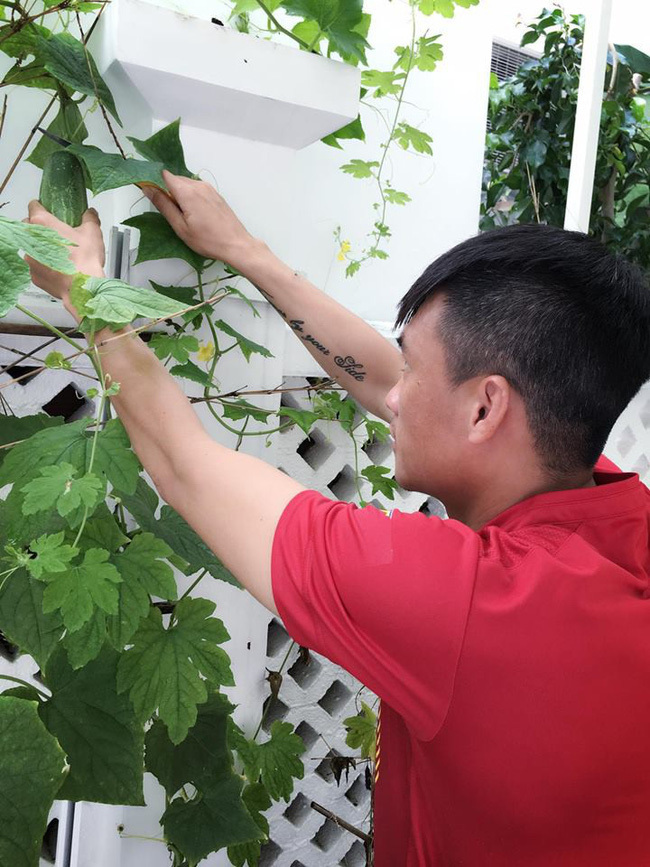 Vườn rau xanh mướt, sai quả trong biệt thự nhà sao Việt