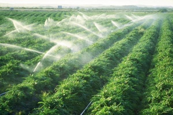 Ninh Phước nhân rộng mô hình tưới nước tiết kiệm