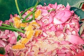 West lake lotus tea – a quintessence of Hanoians