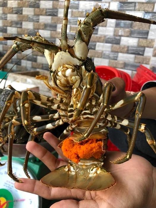 Tôm hùm ôm trứng giá 450 ngàn/kg đổ bộ Hà Nội: Rẻ chưa từng có