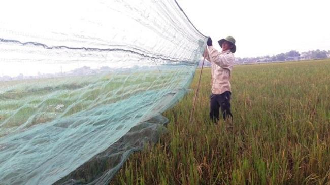 'Tôm bay' giá 250.000 đồng/kg được săn lùng, dân buôn bán cả tạ mỗi ngày