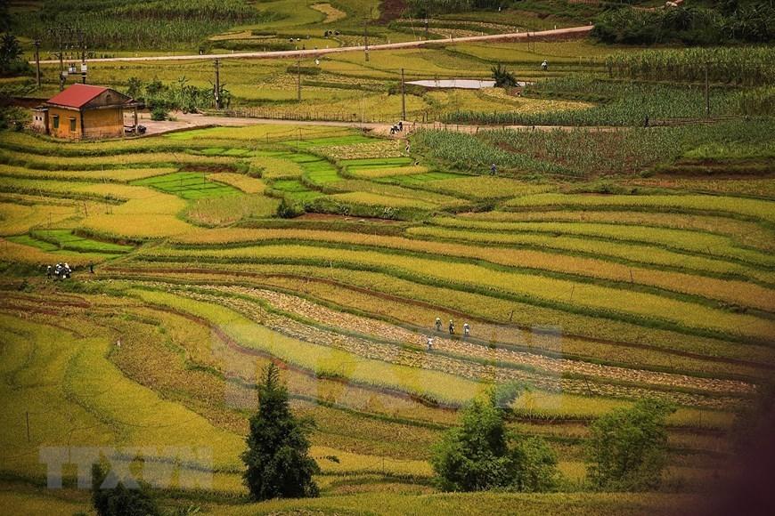 terraced rice fields,hoa binh,tai dai waterfall,cao phong