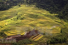 Immense beauty of terraced rice fields in Hoa Binh