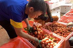 Gần 1.000 mã vùng trồng, nông sản Việt 'rộng đường' vào thị trường khó tính
