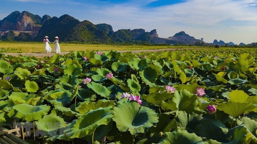 Dreaming beauty of lotus in Ninh Binh