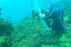 Chuyến lặn biển săn lùng con cá quý tiền triệu