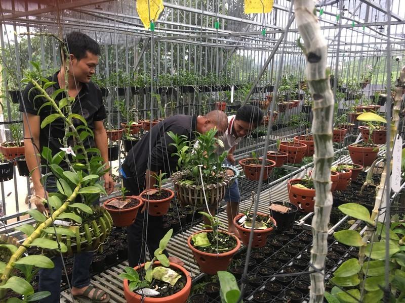 Bán tạ cà phê mua 1 cây lan rừng, sau 2 năm sau có cơ ngơi tiền tỷ