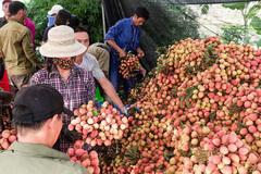 Fruit exports to China down, Vietnam pins hopes on Japan, India