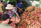 Fruit exports to China down, Vietnam pins hopes on Japan, India