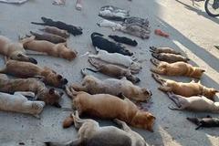 Ăn hết nửa tấn chó mèo đánh bả bằng Xyanua kịch độc nguy hại khôn lường