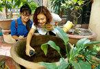 Risk of dengue fever outbreak in Hanoi