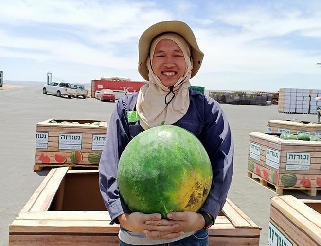 Tu nghiệp sinh người Việt kể chuyện thu hoạch dưa hấu tại Isarel