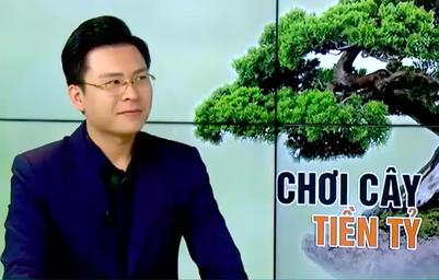 Thú chơi cây cảnh tiền tỷ hay sự xa hoa của người Việt?