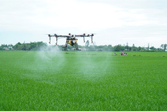 Drones used in rice farming in central Vietnam