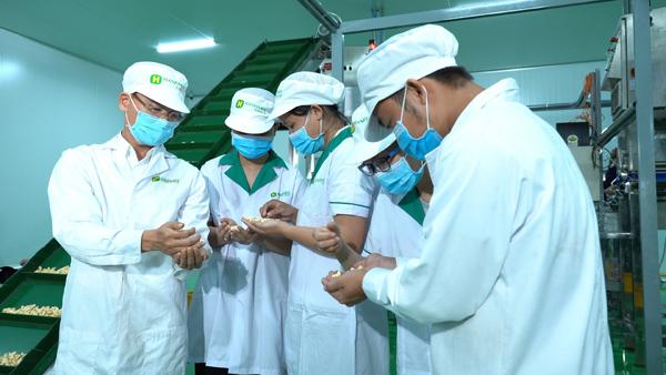 'Thủ phủ' điều Bình Phước có thêm nhà máy chế biến 120 tấn/ngày