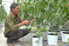 Dong Thap Province keen on switching to efficient irrigation